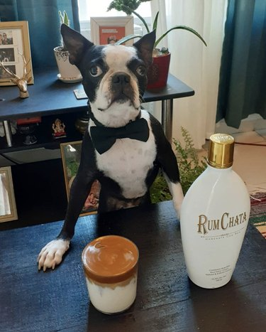 dog in bow tie serving rum