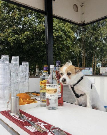 dog serving liquor