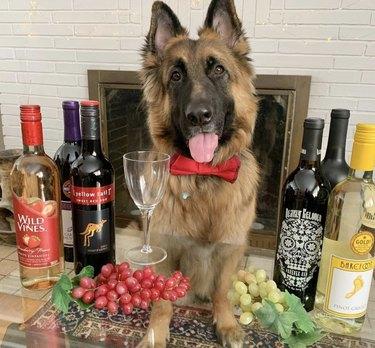 dog surrounded by wine bottles