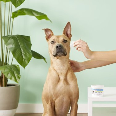Shop Miracle Care Sterile Eye Wash Pads for dogs at Chewy.com