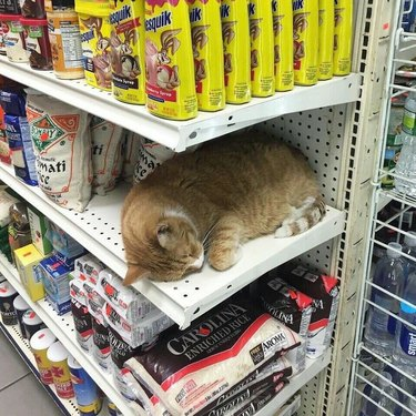 Cat sleeping on shelf of bodega