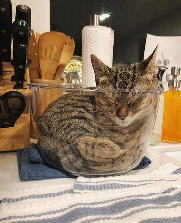 Cat sleeping curled up in glass kitchen bowl
