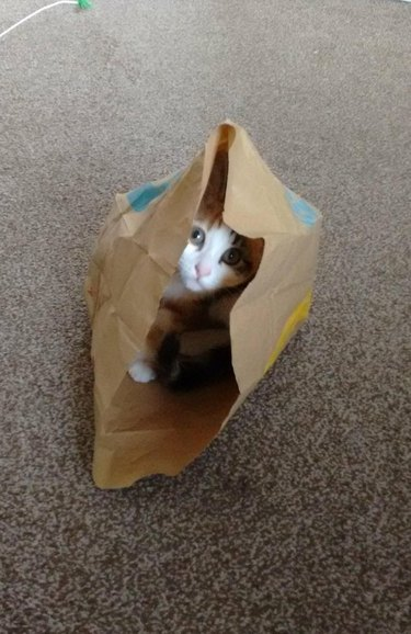 Kitten in McDonald's bag