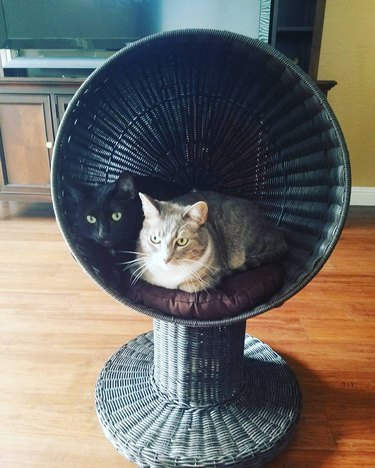 cats in cat chair
