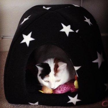 cat in cat cave