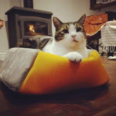cat sleeps in cat bed