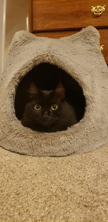 cat finally sleeps in cat bed