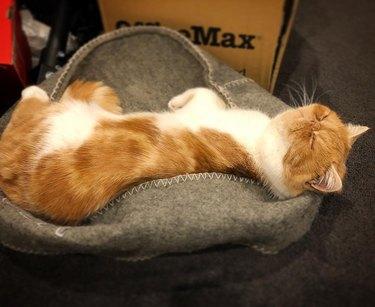 cat sleeps on upside down cat bed