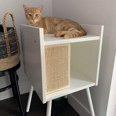 orange cat on cat condo