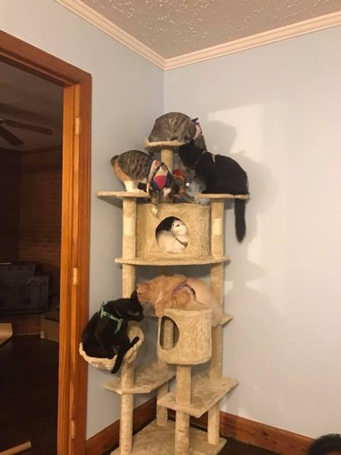 7 cats on cat tower