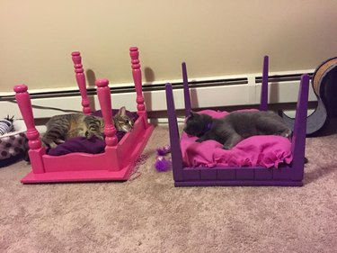 cats in homemade cat beds