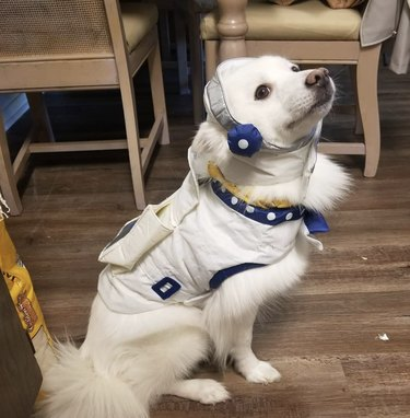 dog in astronaut costume