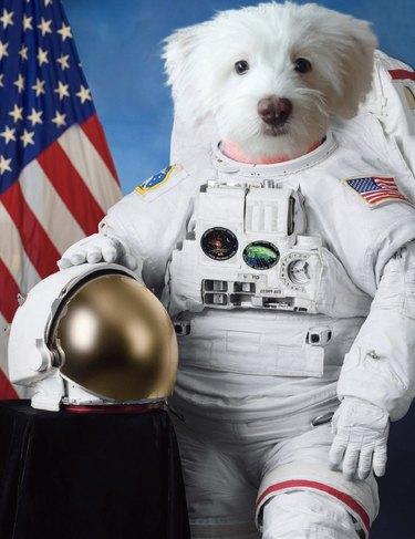 dog in astronaut uniform