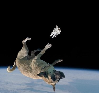 dog floating in space