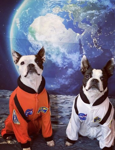 two dogs in astronaut uniforms