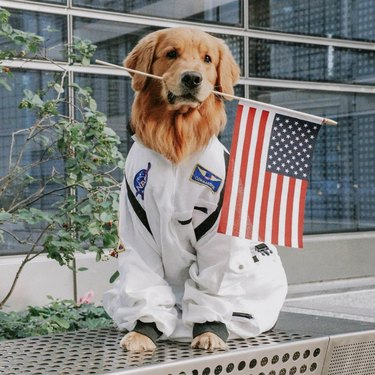 dog in astronaut uniform with American flag