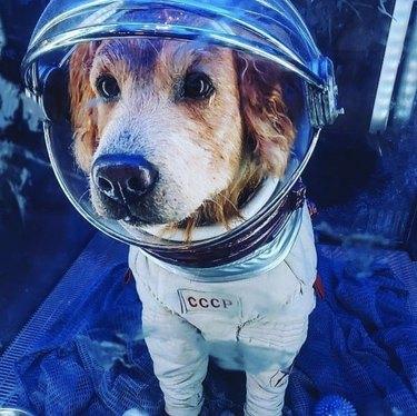 dog in USSR astronaut costume