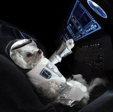 dog in front of shuttle control panel