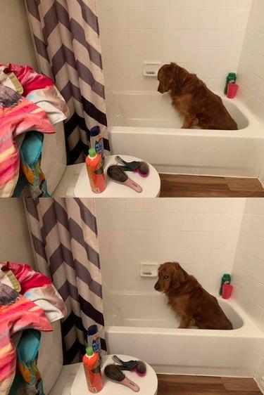 dog shoots side eye at human during bath