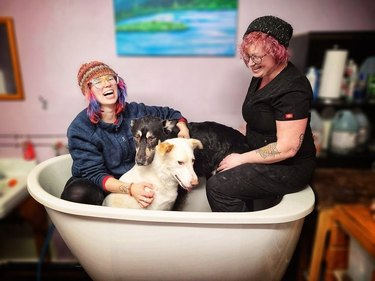 humans provide emotional support for dog