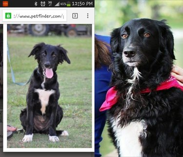 then and now picture of goofy dog