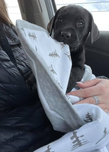 puppy chews on blank