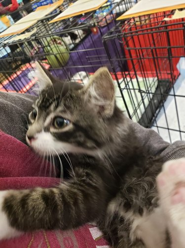 kitten crawls into woman's arms