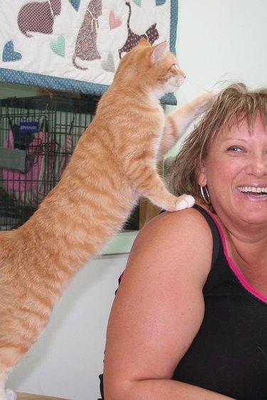 orange cat paws at woman's hair