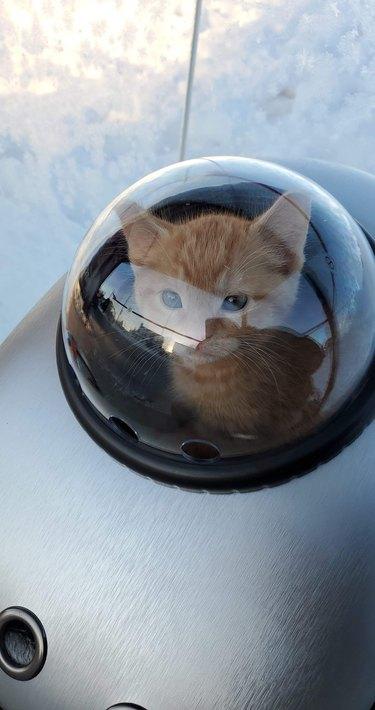 orange kitten in bubble backpack