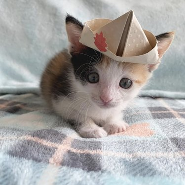 kitten in paper hat