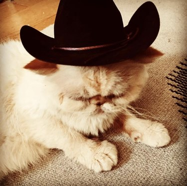 cat in cowboy hat