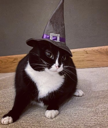 cat in witch's hat