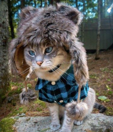 cat in fur hat