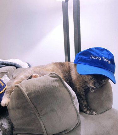 """cat in baseball cap that reads """"doing things"""""""