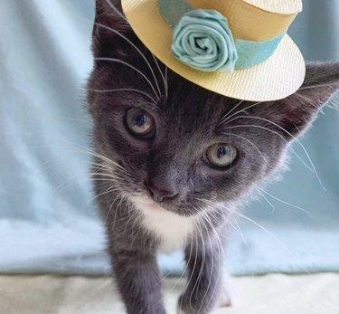 kitten in flower hat