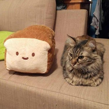 Cat sitting in loaf shape next to pillow shaped like loaf of bread