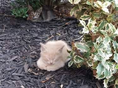 Kitten sitting in loaf shape outdoors