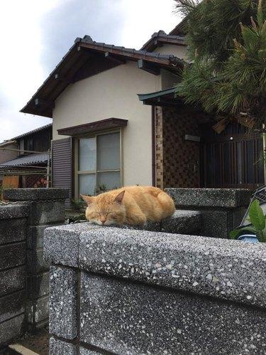 Cat sitting in loaf shape on a garden wall