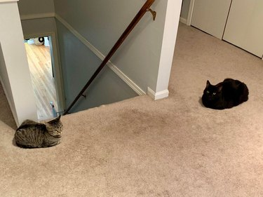 Two cats in loaf shapes facing off