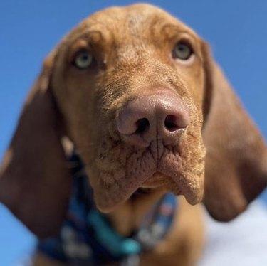 close up of dog nose