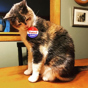 cat with i voted sticker