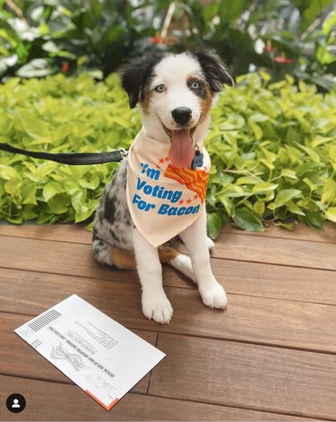 dog with ballot and i'm voting for bacon kerchief