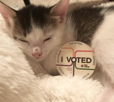 cat sleeping with i voted sticker