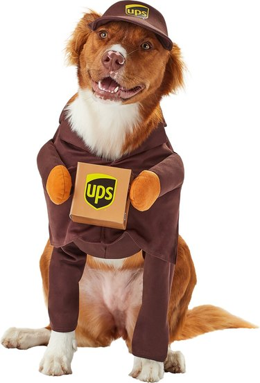 UPS costume for dogs