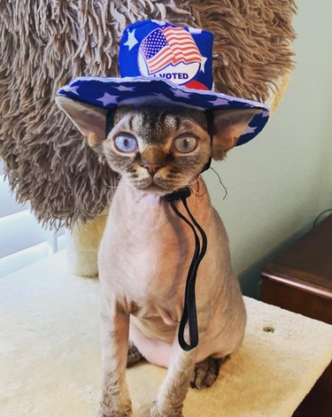 cat with i voted hat