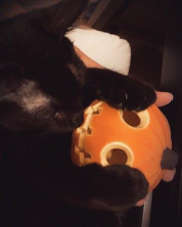 black cats sits on pumpkin