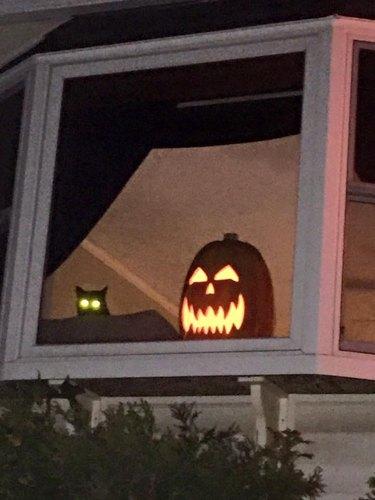 black cat sits next to glowing pumpkin