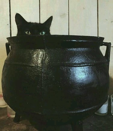 black cat sits in black cauldron