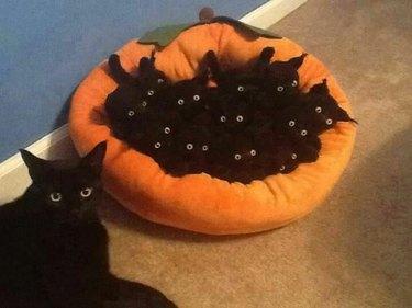 black cat and black cat kittens in pumpkin plush