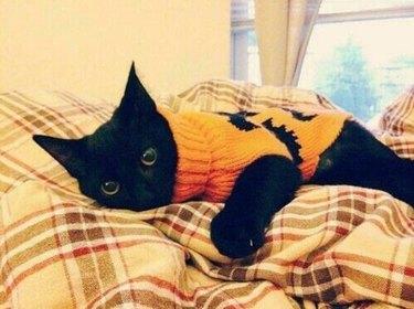 black cat in pumpkin sweater